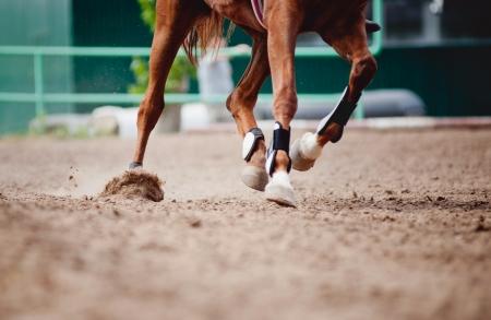 Homöopathie für Pferde – Arthritis beim Pferd