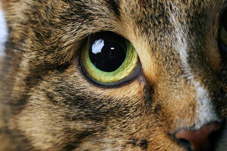 Bindehautentzündung bei der Katze
