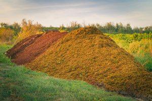 Trester vom Wein bekämpft Bakterien