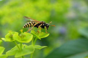 Gesundheit - So halten Sie sich Wespen, Bienen und Mücken vom Hals