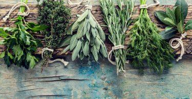 Kräutergarten: Diese Kräuter gedeihen auch im Schatten