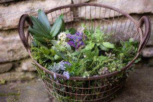 Wildkräuter: Diese Sorten sind gesund und lecker (II)