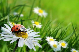 Fit ins Frühjahr: So sind Sie auch mit wenig Schlaf gut ausgeschlafen