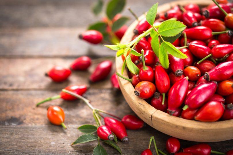 Ernährung: Die Hagebutte als Heilpflanze