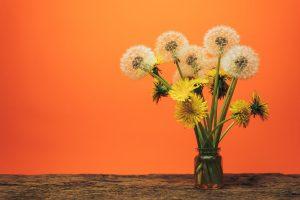 Saft, Tee und Salat: So entschlacken Sie mit Löwenzahn