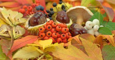 Kreativ im Herbst