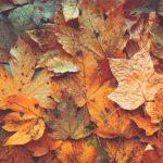 Herbstlaub kann teuer werden