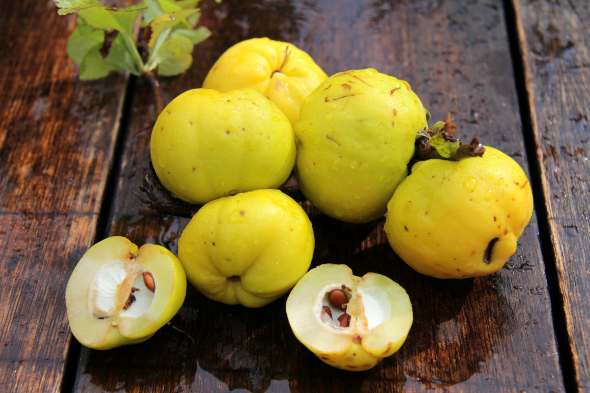 Saisonobst: Quitte, die heilige Frucht der Aphrodite