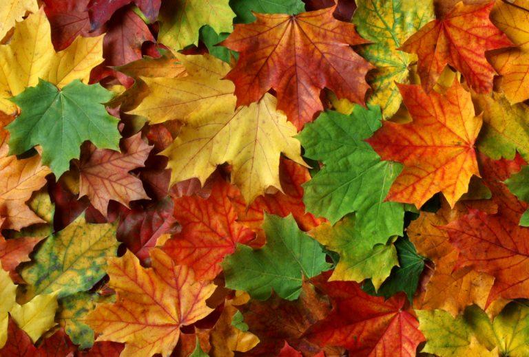 Basteln im Herbst: Schale aus Blättern