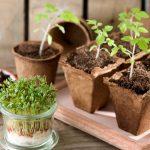 Kinder-Gärtnerei: Naturerlebnisse auf der Fensterbank
