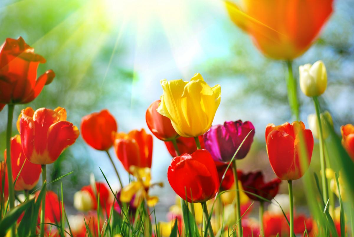 Frühling: Die richtige Zeit für neue Farbe