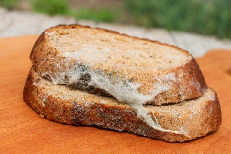Schimmelpilze auf Lebensmitteln: So reagieren Sie richtig!