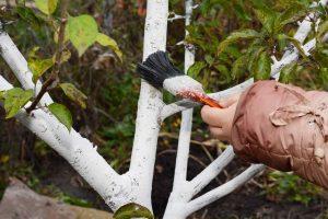 Naturnahe Gärten richtig pflegen: Obstbäume