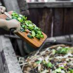 Naturnahe Gärten richtig pflegen: Kompost