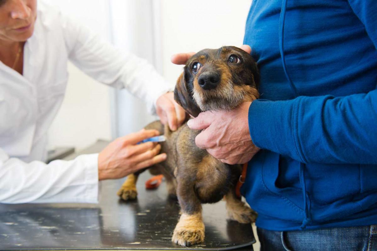 Hat Ihr Hund Stress beim Tierarzt?