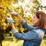 Einpflanzen im Herbst: Die Wurzeln