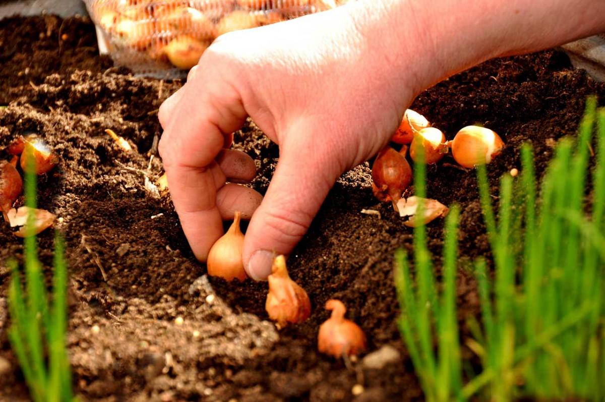 Einpflanzen im Herbst: Der richtige Zeitpunkt