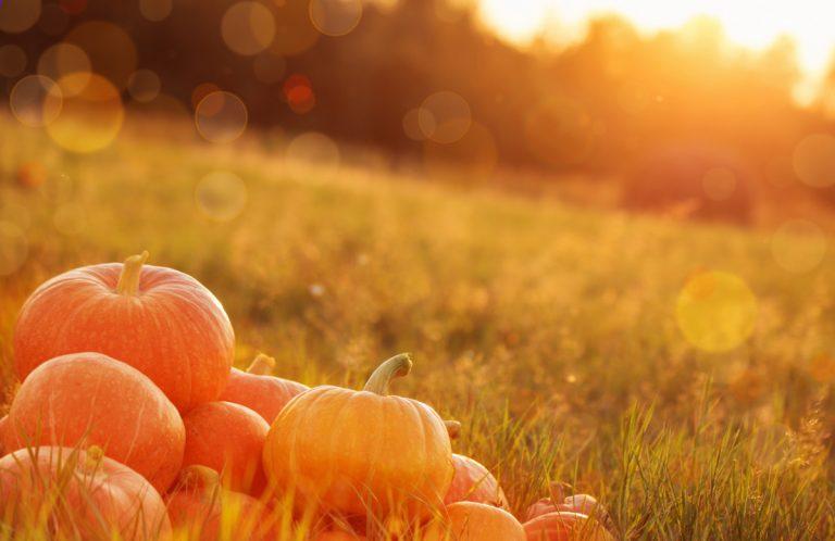 Halloween: Wohin mit dem ganzen Kürbis?