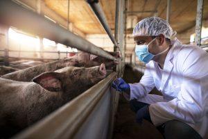 Schweinegrippe-Impfung – Sinnvoll oder gefährlich?