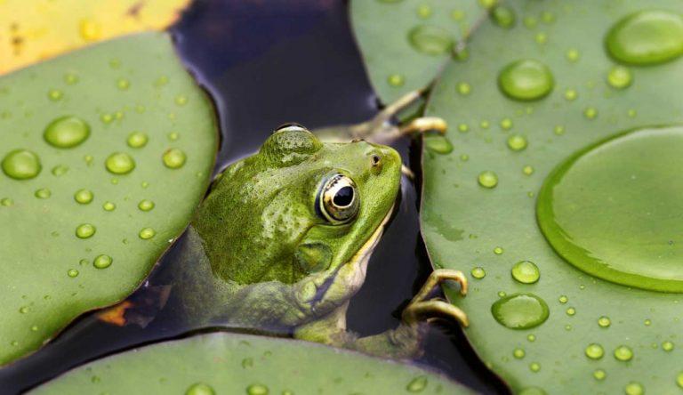 Wunderwelt Teich: Vergissmeinnicht und mehr