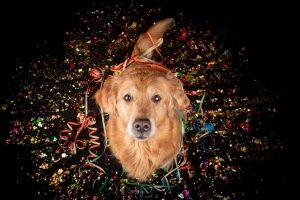 Stress durch Silvesterfeuerwerk: Helfen Sie Ihren Haustieren!