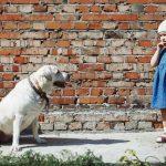 Angst vor Hunden: Warum Hunde Ihre Angst bemerken