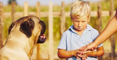 Angst vor Hunden: Was Sie auf jeden Fall vermeiden sollten