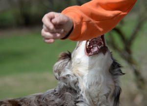 Angst vor Hunden: Was Sie dagegen tun können – zweiter Schritt