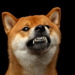 Angst vor Hunden: Was Sie dagegen tun können – erster Schritt