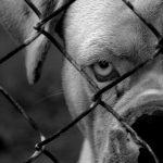 Angst vor Hunden: Was Sie dagegen tun können – dritter Schritt