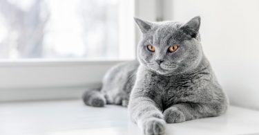 Hauskatzen: Katze oder Kater – Anatomische Unterschiede
