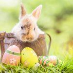 Französischer Basiswortschatz für Ostern