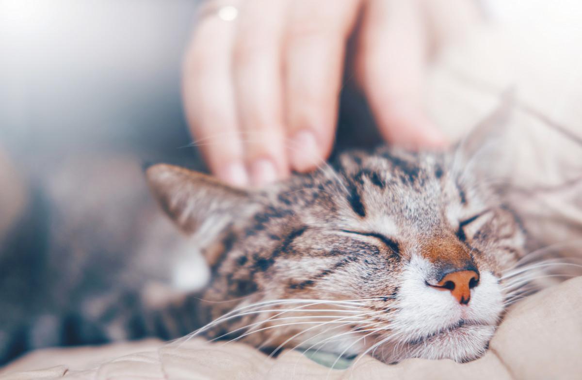Hauskatzen: Katze oder Kater – Ihre Gemeinsamkeiten