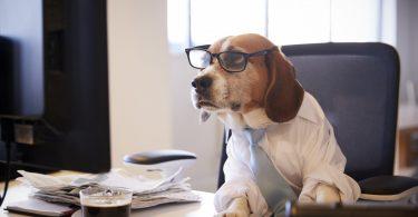 Mit dem Hund ins Büro: Ist Ihr Hund kompatibel? (Teil 1)