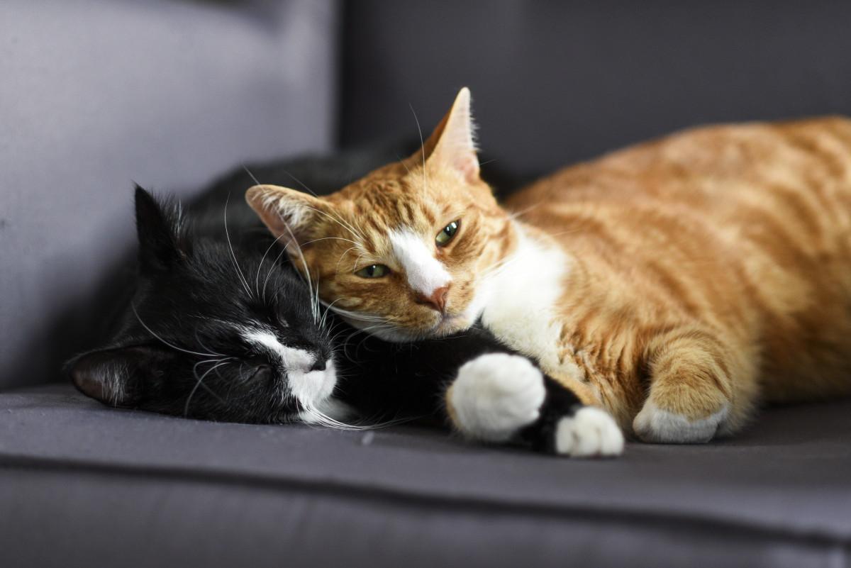 Hauskatzen: Katze oder Kater – Geschlechtsspezifische Unterschiede im Sozialverhalten