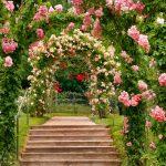Kletterpflanzen: Rosen nach ganz oben