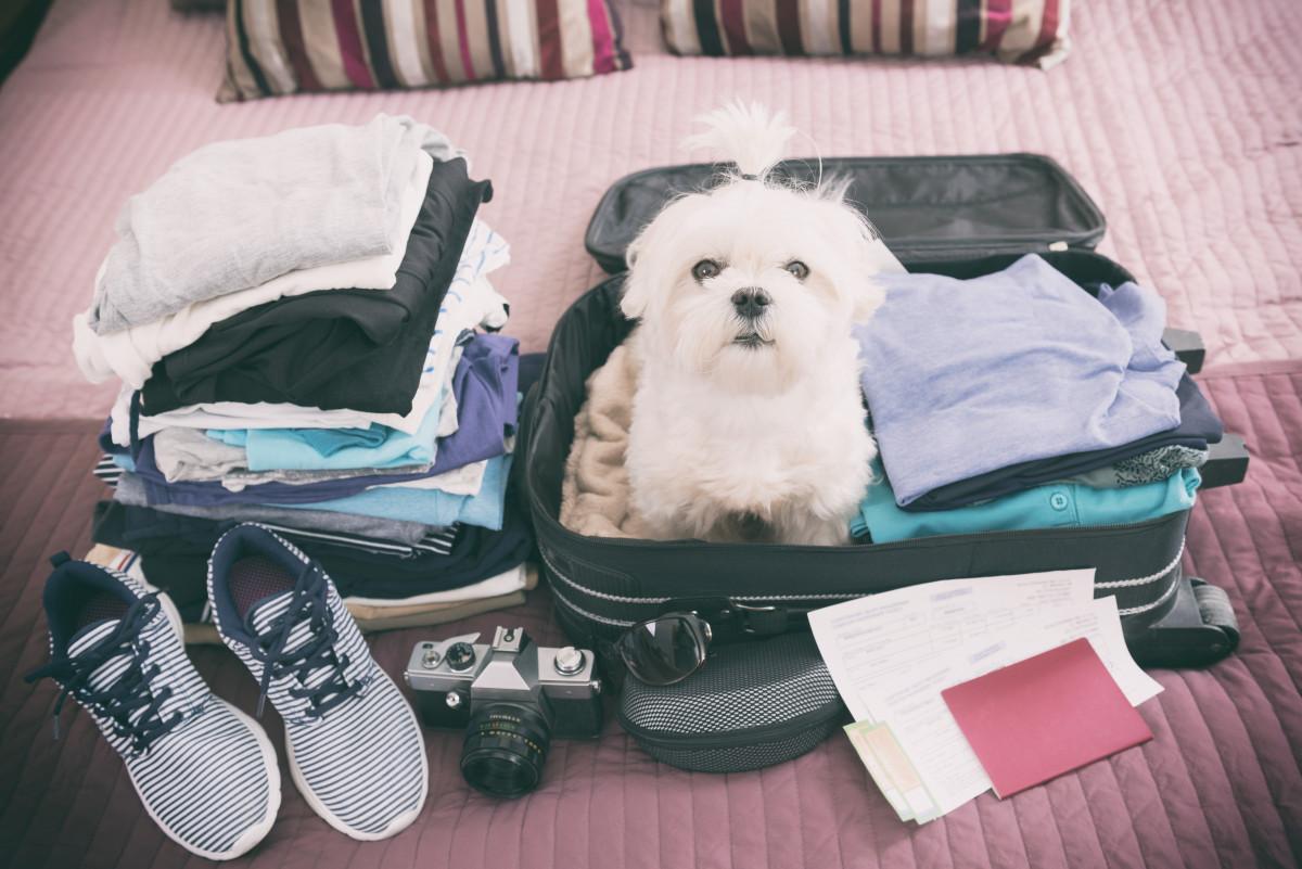 So finden Sie den perfekten Urlaub mit Hund