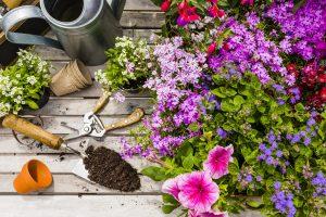 Blumen pflanzen: Vom Topf in den Garten