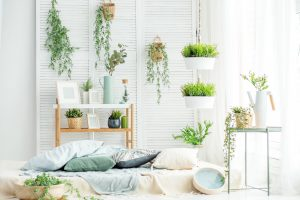 Zimmerpflanzen senken den Ozongehalt