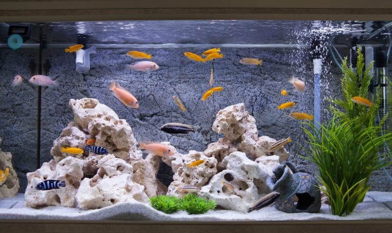 Aquarium: Pflanzen sorgfältig auswählen