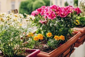 Balkonpflanzen: Wir mögen Sonne