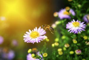 Insektenstiche: Was tun bei Bienenstichen?