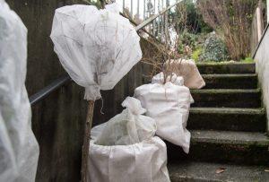Checkliste: Für den Dezember - Pflanzen versorgen