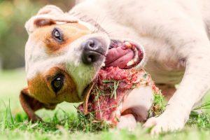 Zahnfleischentzündungen und Maulgeschwüre bei Hund und Katze