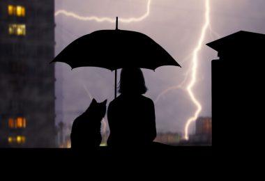 Gewitterangst bei Hund und Katze