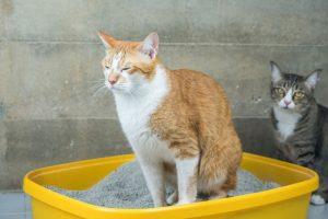 Blasenentzündung bei Katzen