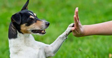 Tierhomöopathie mit Tierpsychologie kombinieren