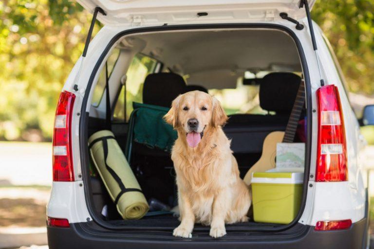 Urlaub mit Hund: Wenn der Vierbeiner mit auf Reisen geht
