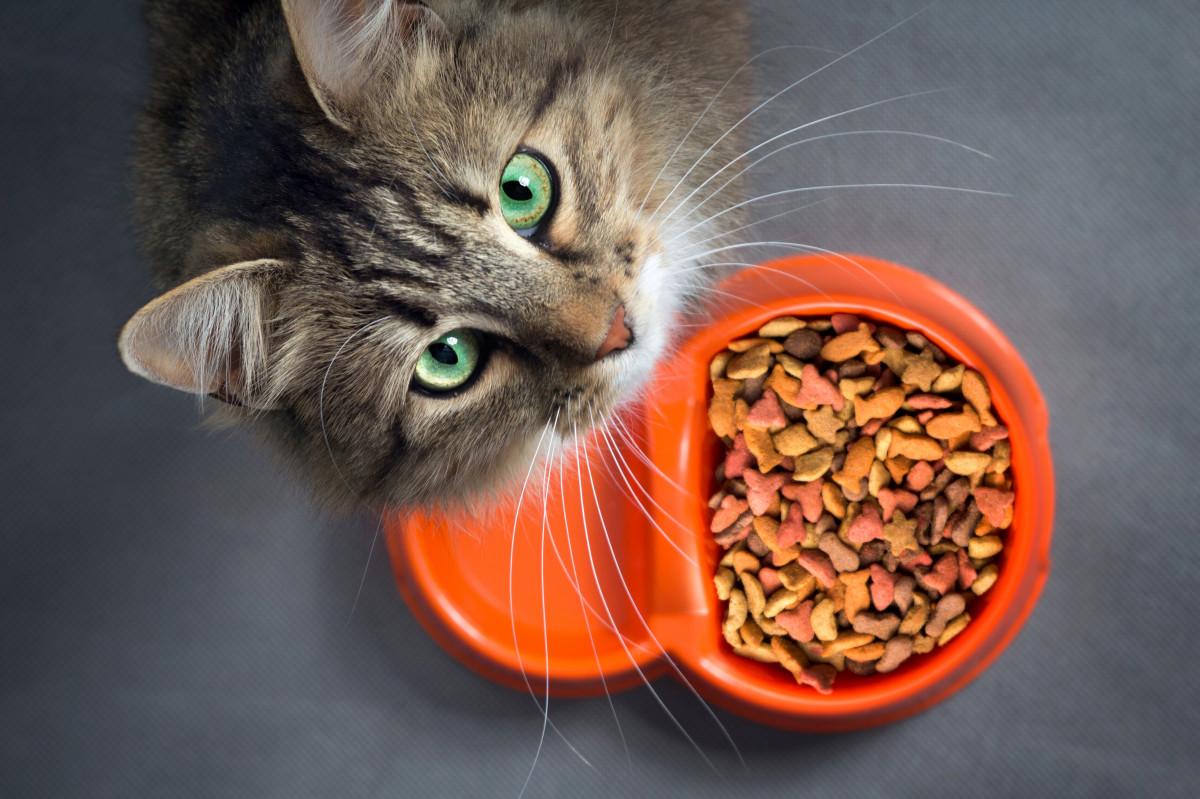Gesunde Katzenernährung: Vegane Ernährung für Katzen ungeeignet