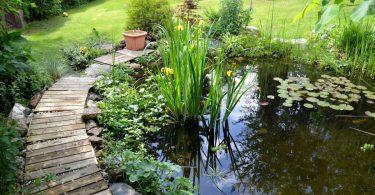 Gartenteich: Pflanzen bereichern das Biotop